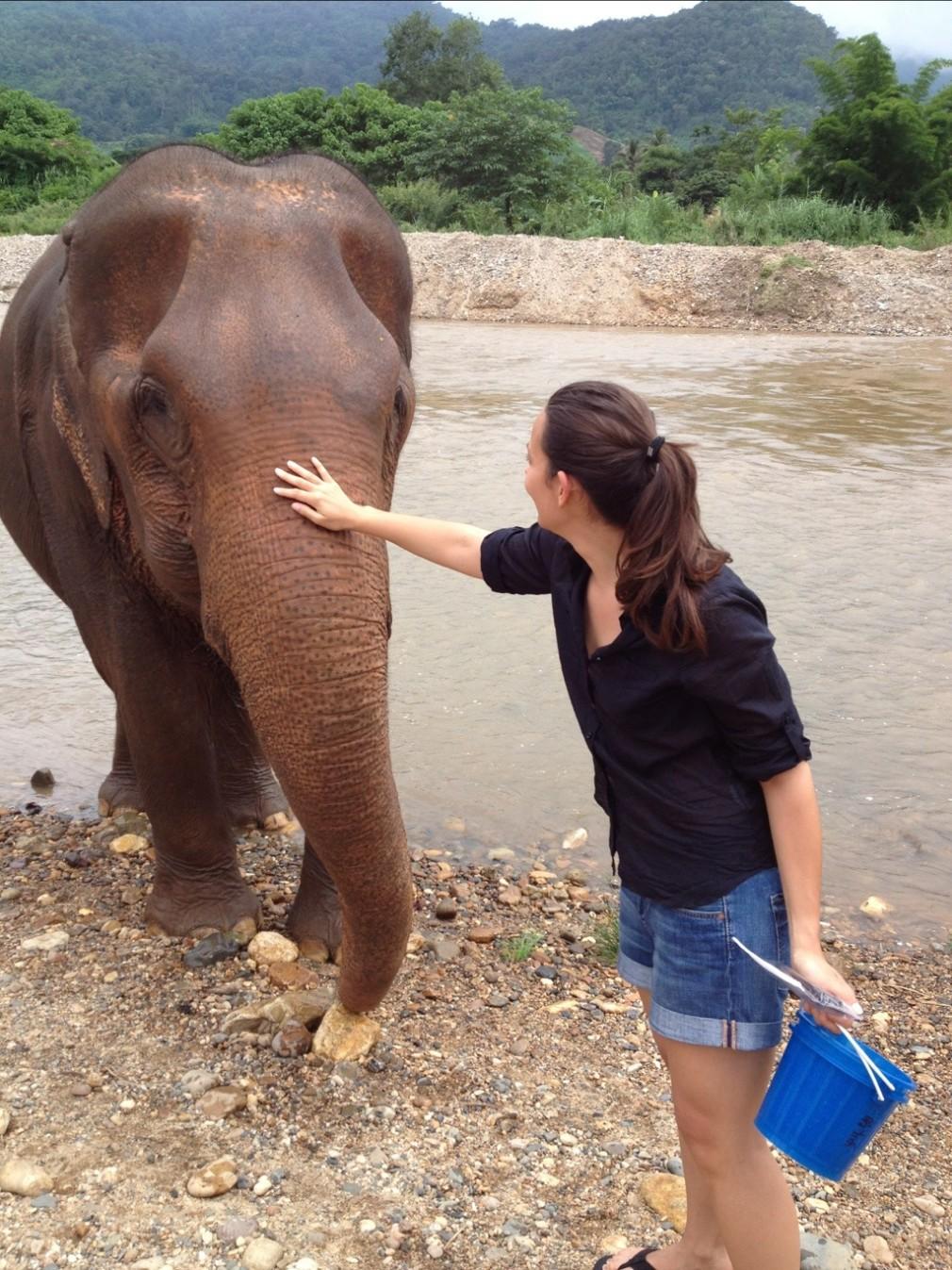 Elefanten in den Bergen von Chiang Mai