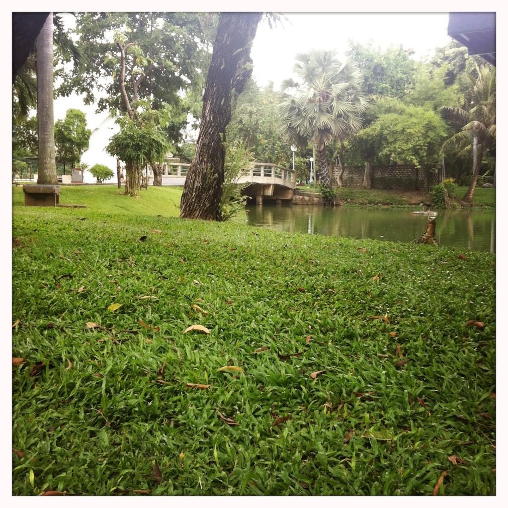 Bangkok Warane im Lumphini Park