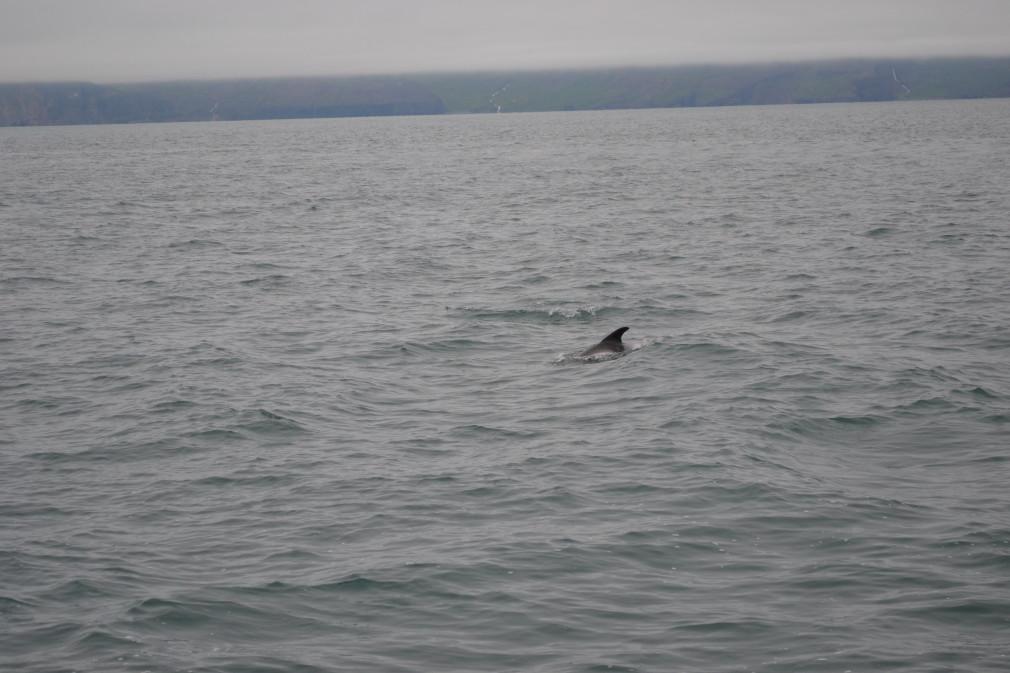 Rückenflosse ... ein Delfin