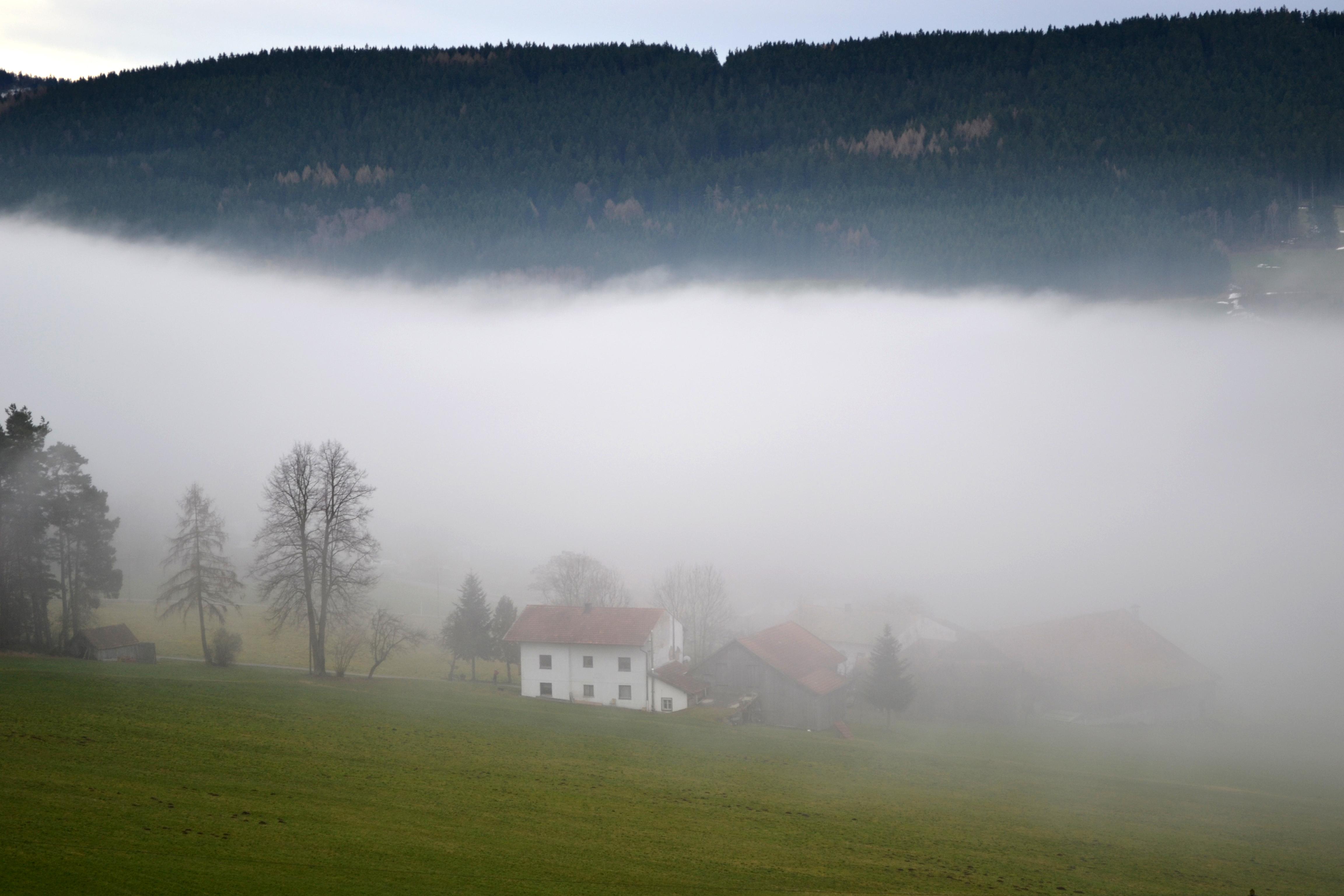 Nebelschwaden im Bayerischen Wald bei Neukirchen beim Heiligen Blut