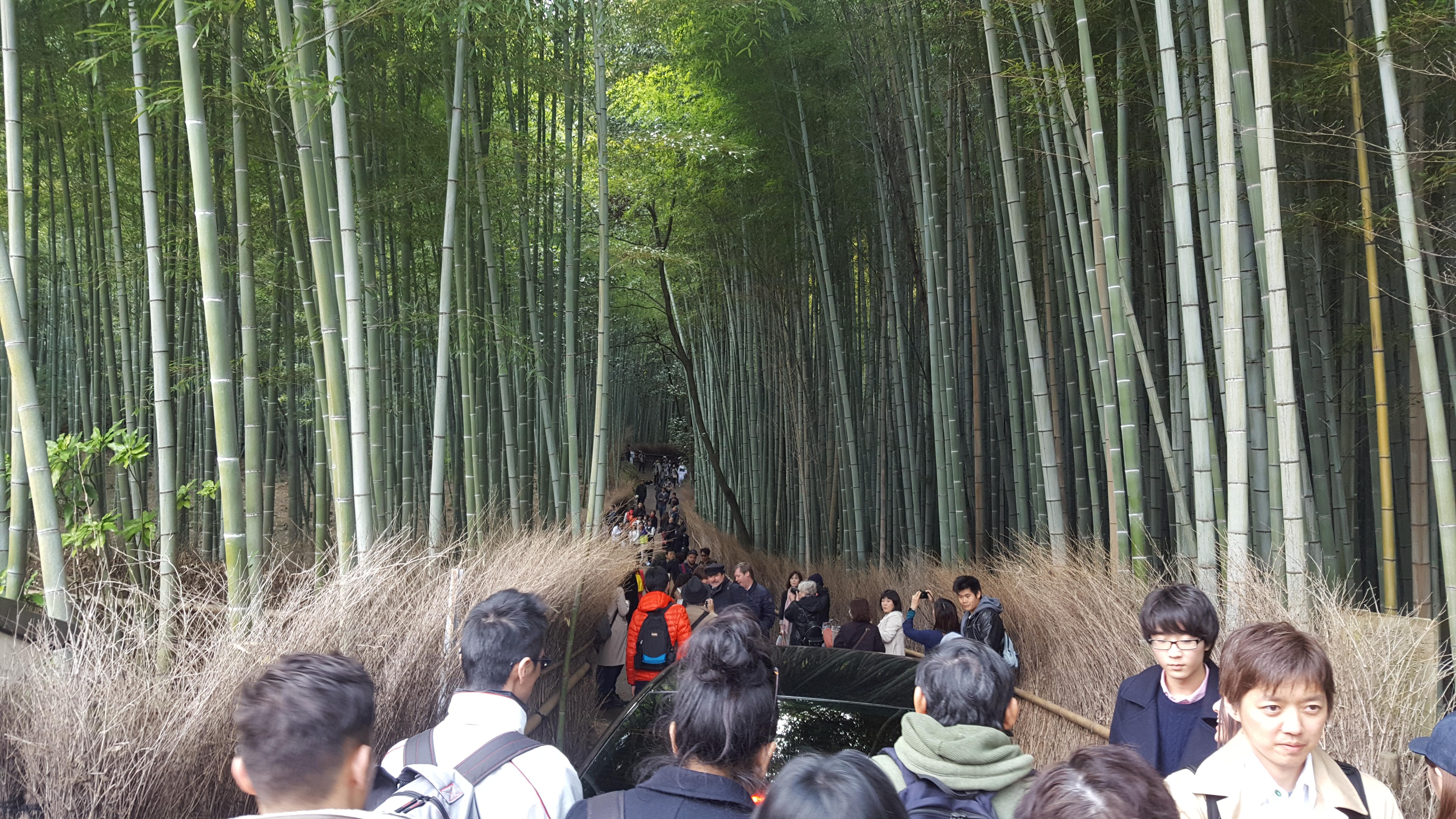 Ein Echter Geheimtipp Ii Der Bambuswald Von Sagano Arashiyama