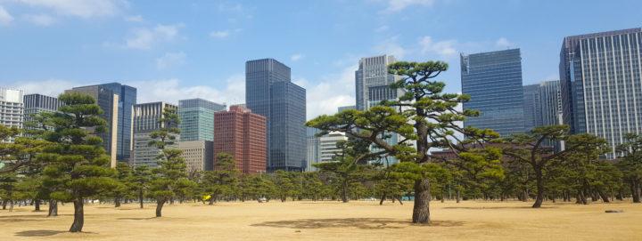 Bäume im Außengelände des Kaiserparks in Tokyo