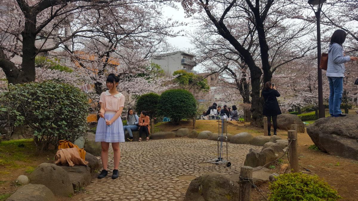 Kirschblüte im Sumeida Park mit Fotographin