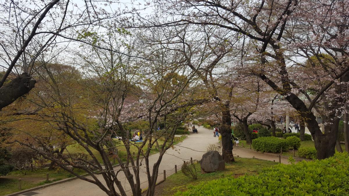 Kirschblüte im Sumeida Park