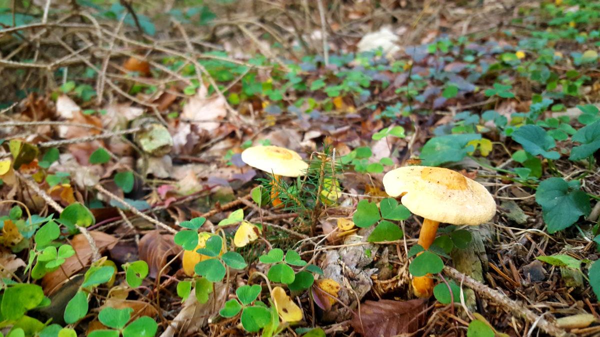 Rund um die Dhünntalsperre: Pilze
