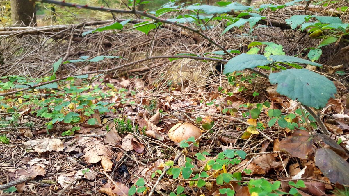 Rund um die Dhünntalsperre: Ein Pilz